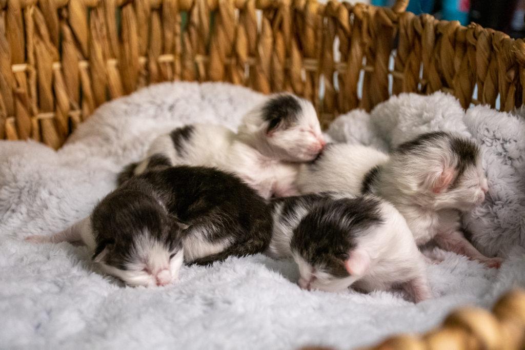 Stella's kittens 2.26.20